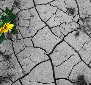 Bodenregenerierung